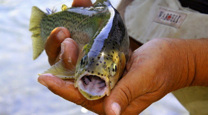 Bank Fishing: How To Catch Your Limit