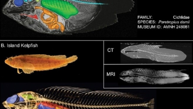 UW Professor to 3D Scan every Fish in the World