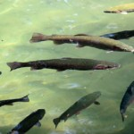 Use Fish WebCams for Better Fishing