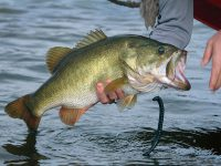 best-places-largemouth-bass-oxygen-water