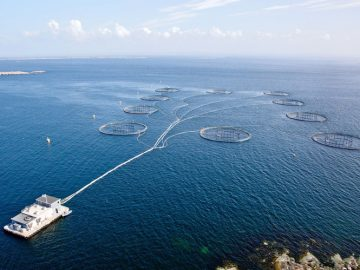 fish-farming-industrial-scale